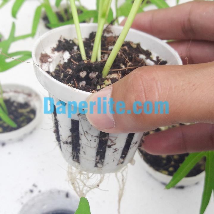 Đá Perlite ươm giống gieo hạt rất tốt cho cây
