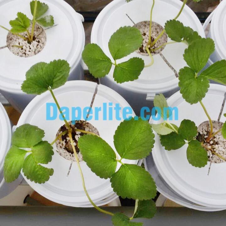 Hướng dẫn dùng đá Perlite trồng cây giống hiệu quả