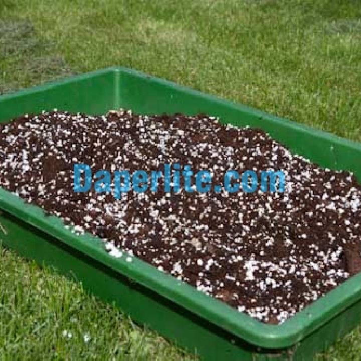 Cách sử dụng đá Perlite trồng ớt xanh