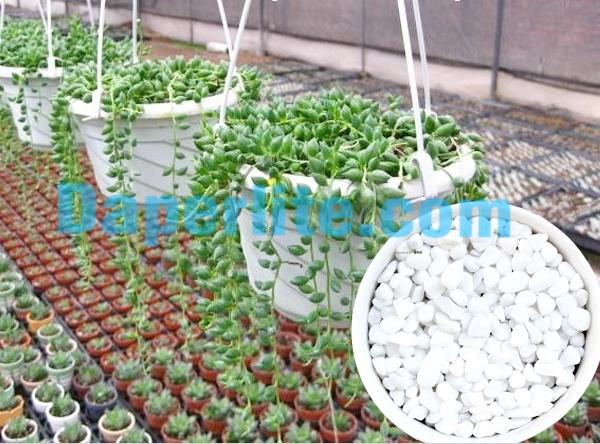 Đá Perlite Namix cung cấp tại Cần Thơ chuyên làm vườn tươi tốt