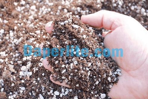 Đá Perlite Trân Châu thay thế xơ dừa trồng cây hiệu quả