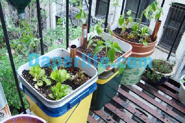 Giá thể đá Perlite trồng rau trong thùng chứa