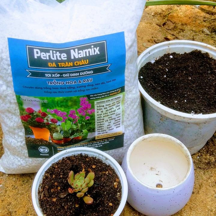 Đá perlite trồng sen đá