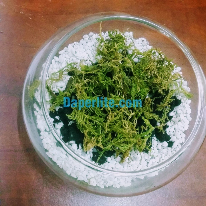 Cách tạo terrarium với sen đá