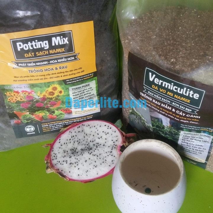 Cách trồng cây may mắn bằng hạt thanh long