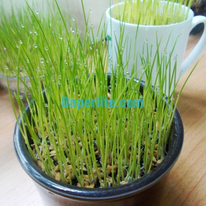 Cách sử dụng đá vơ mi Namix trồng rau mầm lúa mạch