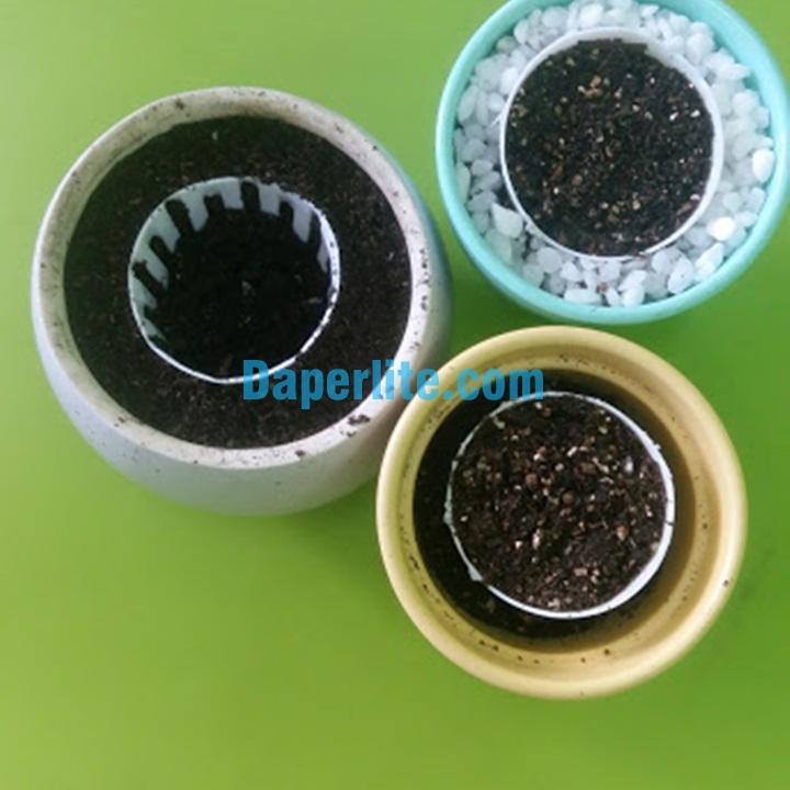 trồng cây may mắn bằng hạt thanh long