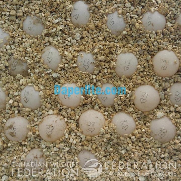 Cung cấp đá Vermiculite để ấp trứng. Đá Vermiculite Namix chất lượng