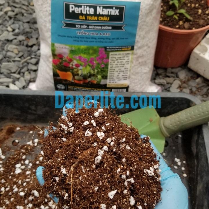 Đá perlite Namix trồng sen đá.