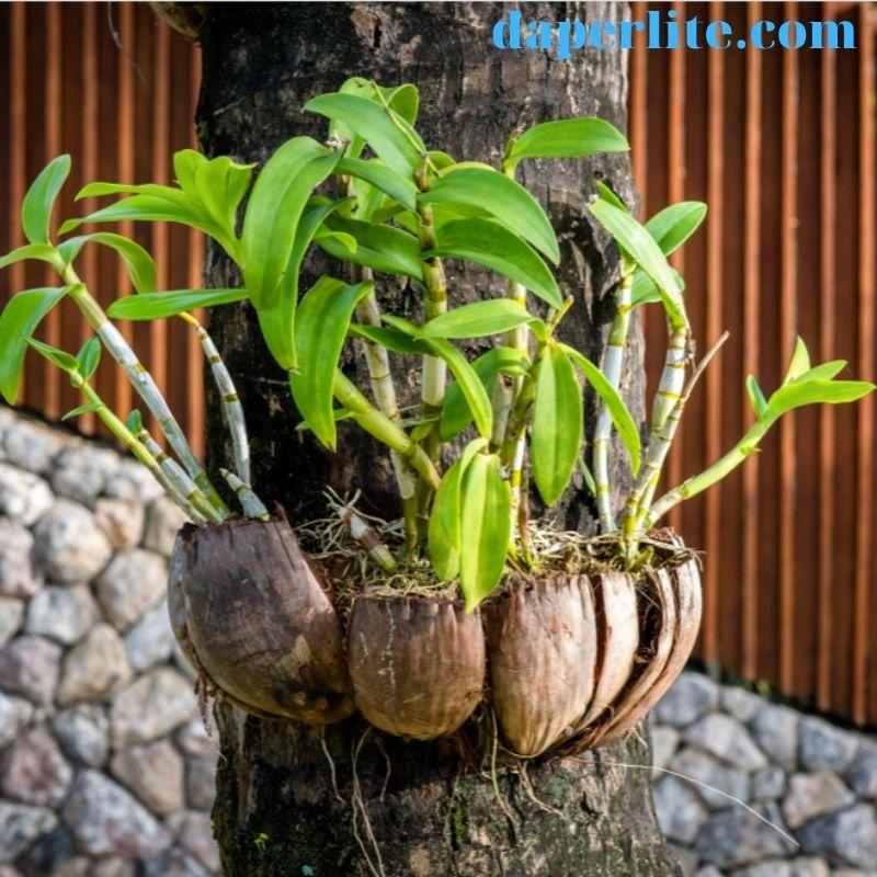 vỏ dừa trồng lan