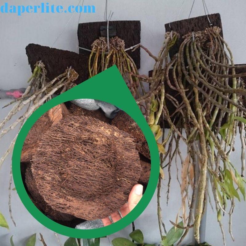 Vỏ dớn trồng lan