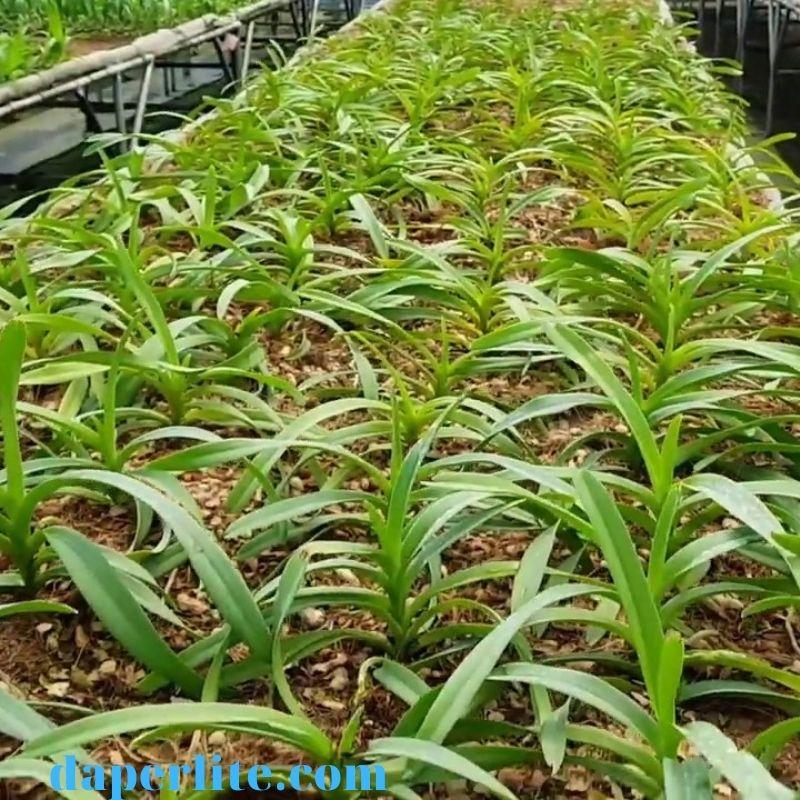 vỏ đạu phộng trồng lan